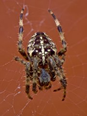 Stacked Spider image.jpg